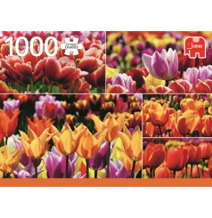 1000 - Tulipes de Hollande